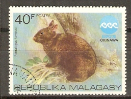 MADAGASCAR        -     LAPIN     -    Oblitéré - Rabbits