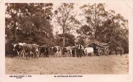 "04355 ""AN AUSTRALIAN BULLOCK TEAM"" ANIMATA. CART. ILLUSTR. ORIG. SPEDITA 1927. - Australia"
