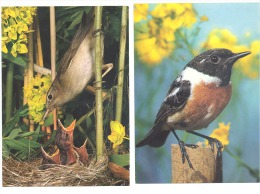 Lot De 5 CP - Oiseau - Oiseaux  - La Chaîne Bleue Mondiale - Birds