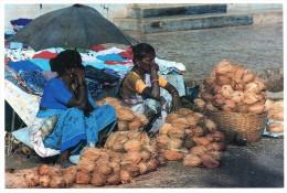 ......inde  Coconuts  Goa  India - India