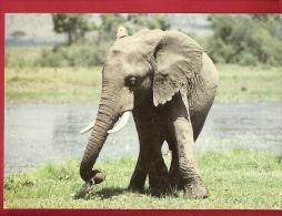 HAS-23  Eléfant Eléphant Africain. Timbres Du Kenya. Circulé En 1992 - Olifanten