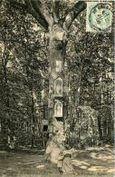 St Germain En Laye (78) - Dans La Forêt - Le Chêne De La Vierge Des Anglais - St. Germain En Laye