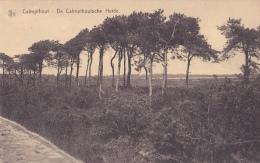 KALMTHOUT / CALMPTHOUT : De Calmpthoutsche Heide - Kalmthout