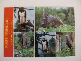 Postcard Postal Birds Parque Ornitológico O Zoo De Lourosa Santa Maria Da Feira Portugal - Oiseaux