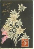 CPA SOUVENIR DES ALPES EDELWEISS 12438 - Fleurs