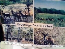 SUDAN DINDER PARK  ANTILOPI  N1975  FB7203 - Sudan