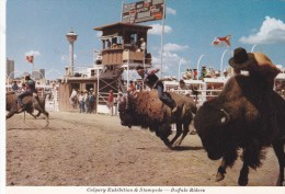 Calgary Exhibition & Stampede, Buffalo Riders, AB, ALBERTA, Canada, POST CARD, POSTCARD Carte Postale - Calgary