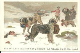 Image Le Chien Du Saint Bernard - Vieux Papiers
