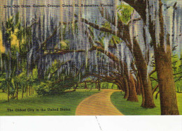 Live Oak Drive, Garnett Orange Grove, St Augustine ,Florida - St Augustine