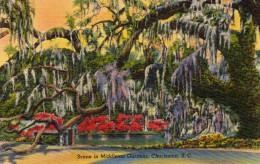 Scene In Middleton Gardens,Charleston - Charleston