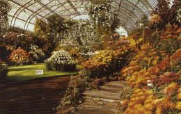 Chrysanthemum Flower Show Garfield Park,Chicago,Illinois - Chicago