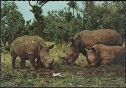 "Tansania - White Rhinoceros - 2x Nice Stamps ""fish"" - Tansania"