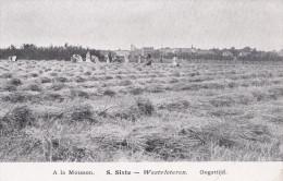 VLETEREN  WESTVLETEREN  (A LA MOISSON ) AGRICULTURE - Vleteren