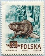 N° Yvert 788 - Timbre De Pologne (1954) - MNH - Castor ((JS) - 1944-.... República