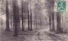CPA - AMOUGIES - Une Vue Dans Le Bois - Belgique