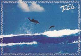 CPM Tahiti Passe De Tiputa Rangiroa - Tahiti
