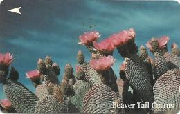 Singapore - Beaver Tail Cactus, Flowers, 32SIGΒ, 1994, 419.000ex, Used - Singapore