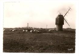 OUESSANT - LOC GWELTAS - Moulin - Moutons - Ouessant