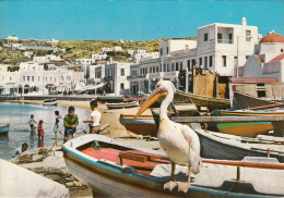 Myconos Island View Peter The Pelican Of The Island - Grèce