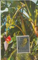 31757- BANANA TREE, MAXIMUM CARD, 1961, SURINAME - Alberi