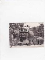 Zoo Zurich - Elefanten - Eléphant ... - ZH Zurich
