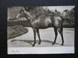 Old Postcard - Edles Blut (1961) (14,8 X 10,5 Cm) - Caballos