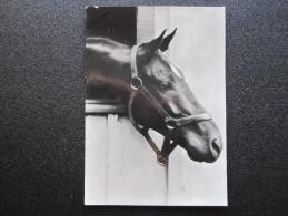 Old Postcard - Horse (1954) (14,6 X 10,2 Cm) - Caballos