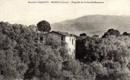 CORSE  -  Env. D'AJACCIO : Les MILELLI, Propriété De Campagne De La Famille Bonaparte - Oliveraie - Ajaccio