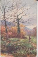 Tuck Postcard  Pitoresque Devon - Tuck, Raphael