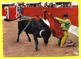 Lot 9 Superbe CARTES CORRIDA TORERO ( Toutes Scannée Recto Verso ) - Corrida