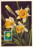 SUISSE Carte Maximum - Narcisse Jaune - Maximum Cards