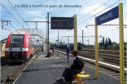 Un TER à L'arrêt En Gare De Rivesaltes , Pyrénées-Orientales - Une Photo Reproduit Carte Postale  10x15 Cm. - Stations - Met Treinen
