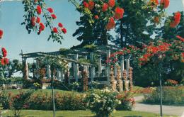 Geneve La Roseraie Du Parc De La Grange - GE Genève