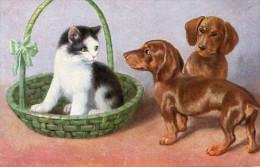 CHAT_CHIEN - Katten