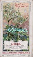 Chromo - Edition De La Chocolaterie D'Aiguebelle (Drôme). - Les Plantes Médicinales - Spirée. (voir Scan). - Aiguebelle