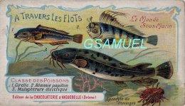 Chromo - Edition De La Chocolaterie D'Aiguebelle (Drôme). - Le Monde Sous Marin - Girelle - Blennie - Malaptérure - Aiguebelle