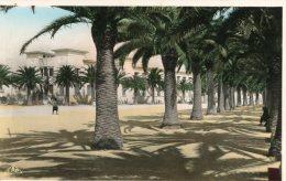B17517 Bizerte,   Avenue De La Marne - Tunisie