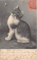 CPA Fantaisie - Chat - Cat - Katten