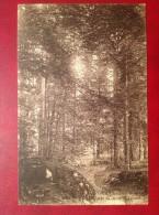 69 Rhone MONTSOLS  Dans Le Bois De Sapins Du Mont St Saint Rigaud (bis) Monsols - Altri Comuni