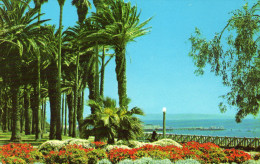 View In Palisades Park, Santa Monica - Los Angeles
