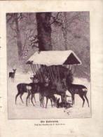 Am Futterplatz - Druck, Entnommen Aus Velhagen Und Klasings- Monatsheften/ 1909 - Zeitungen & Zeitschriften