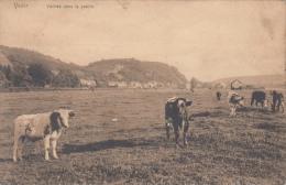Yvoir   Vaches Dans La Prairie          Nr 5008 - Yvoir