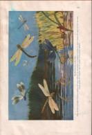 Beilage Aus Kosmos 1920 - Zeitungen & Zeitschriften