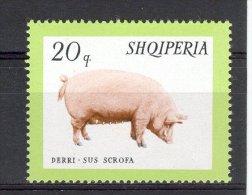 ALBANIE 1966 YT 853   PORC - Albanie