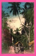 Missions Des Oblats De Marie Immaculée à Ceylan - Colombo - Route De Galle - Animée - THILL - NELS - Colorisée - Sri Lanka (Ceylon)
