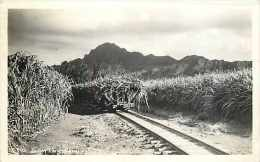 246881-Hawaii, Kauai, RPPC, Sugar Cane Farm, Photo No S-595 - Kauai