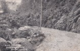 Australia New South Wales State 1904 Used Postcard, Camberwarra Mountain - Postcards