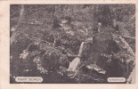 Australia New South Wales State 1904 Used Postcard, Fairy Bower - World