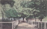 Australia New South Wales State 1904 Used Postcard, The Avenue Botanical Garden Goulburn - World