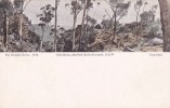 Australia Unused Postcard, Glen Rosa - Postcards